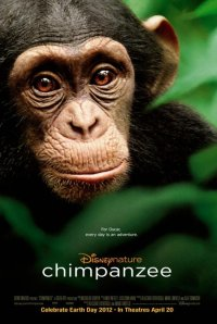 Chimpanzee from Disneynature